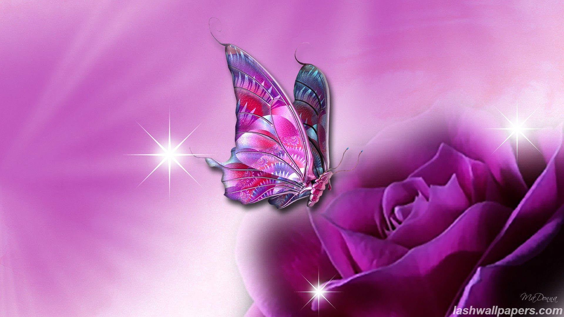 Butterfly Wallpapers Free Download Group (66+)