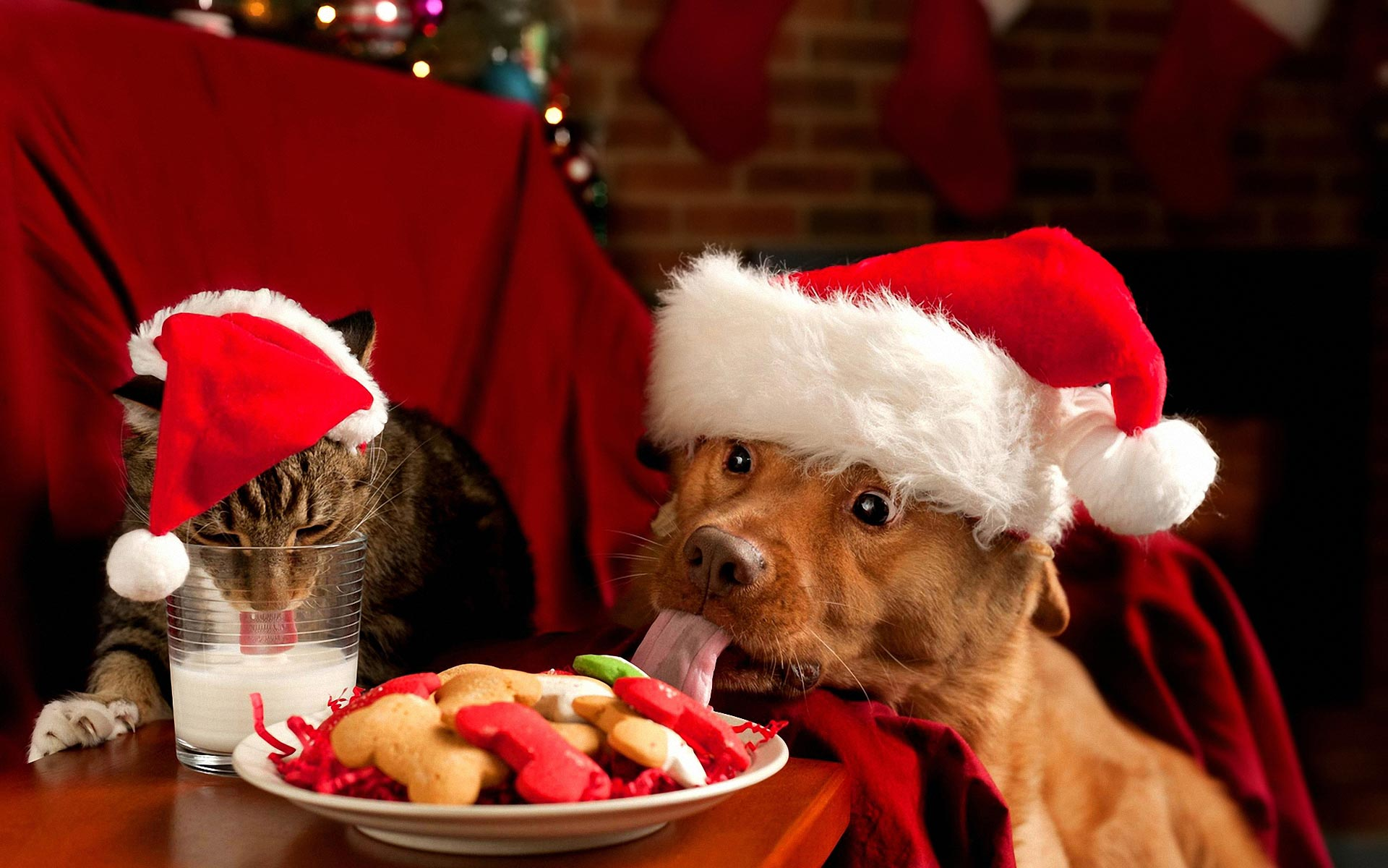 Christmas Cat Wallpapers - Wallpaper Cave