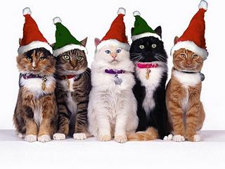christmas cat wallpaper (86) – veterinary-surgeons net