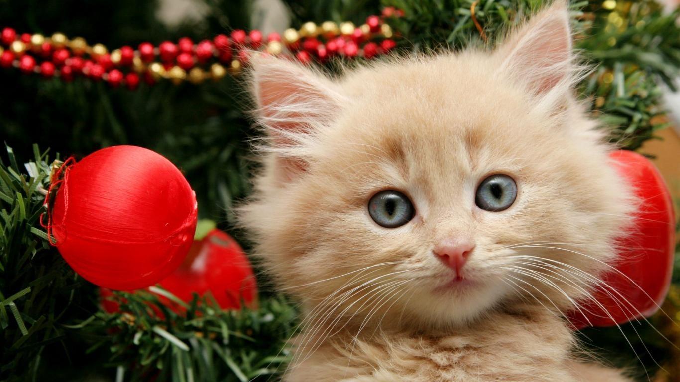 Christmas Cat Wallpaper - WallpaperSafari
