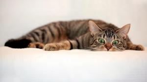 Full HD 1080p Cat Wallpapers HD, Desktop Backgrounds 1920x1080