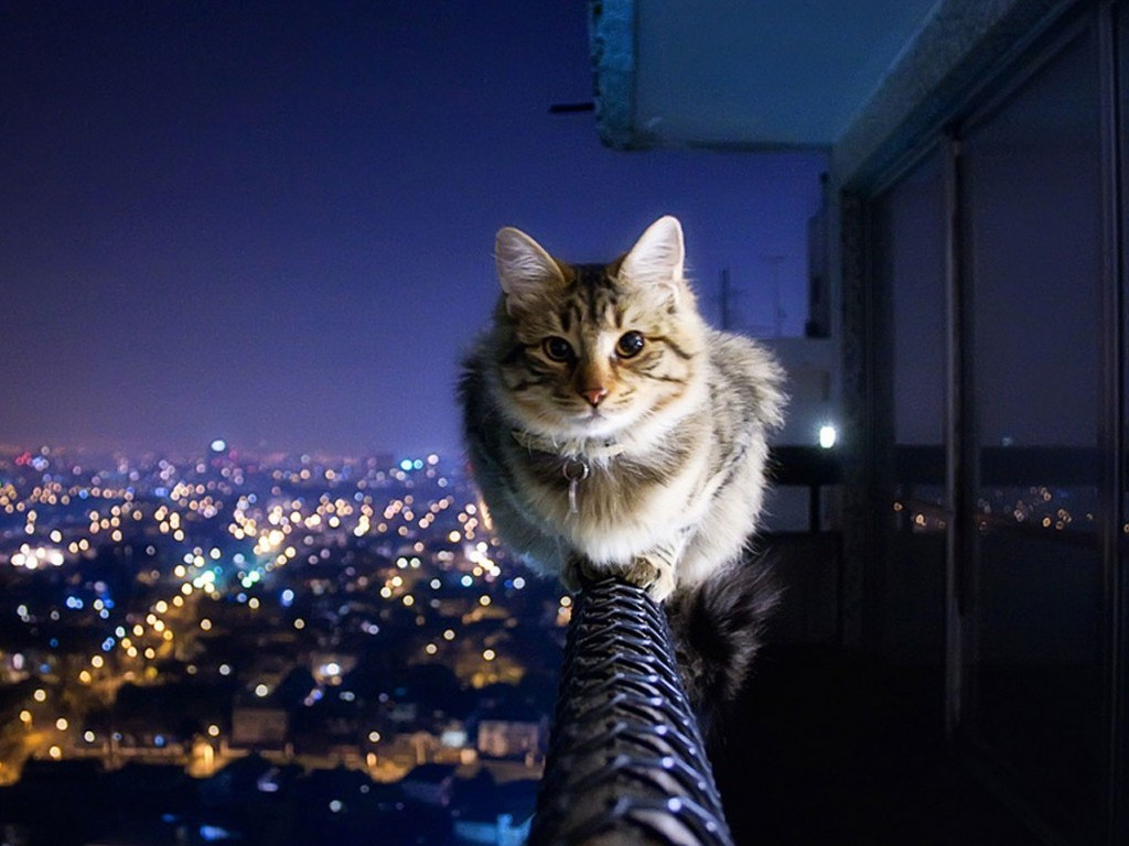 Collection of Cat Desktop Wallpaper on HDWallpapers