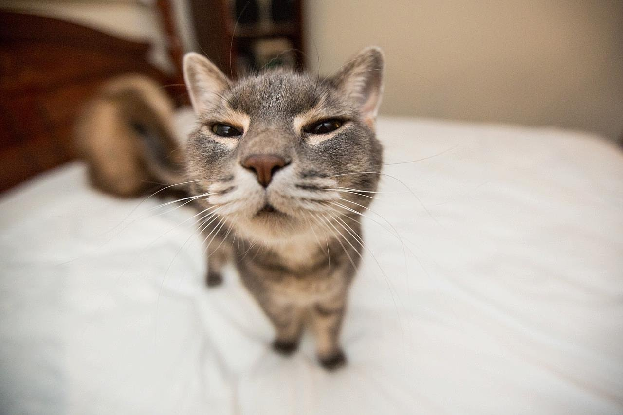 Collection of Funny Cat Desktop Backgrounds on HDWallpapers