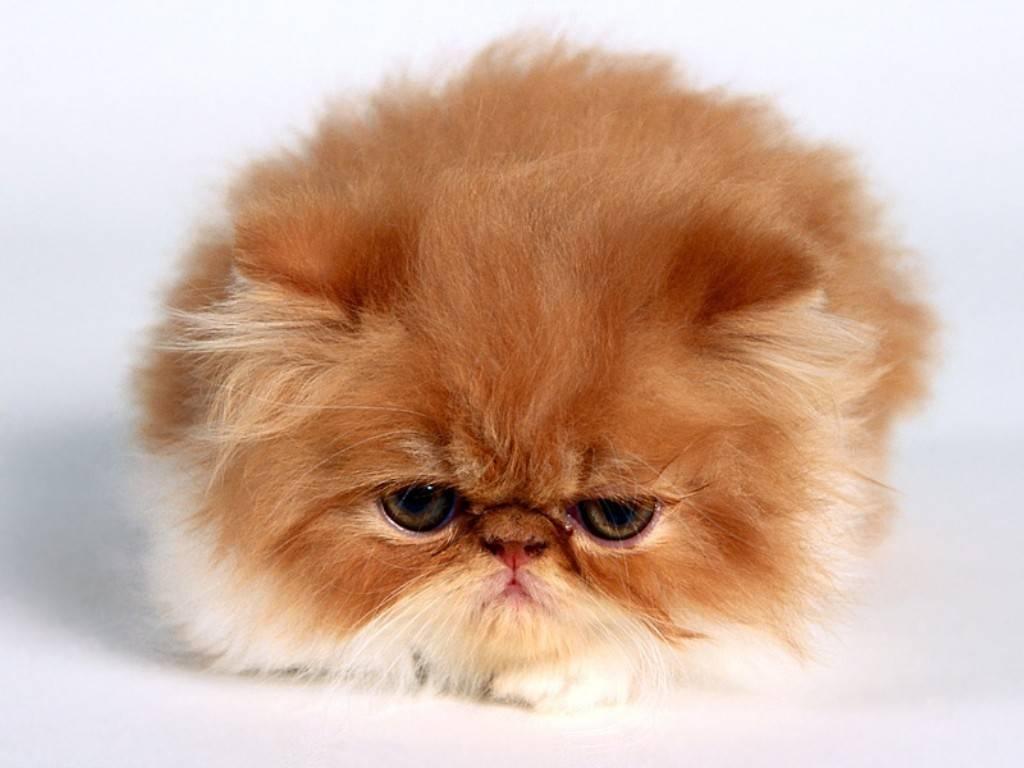 Cat Desktop Backgrounds Page 1