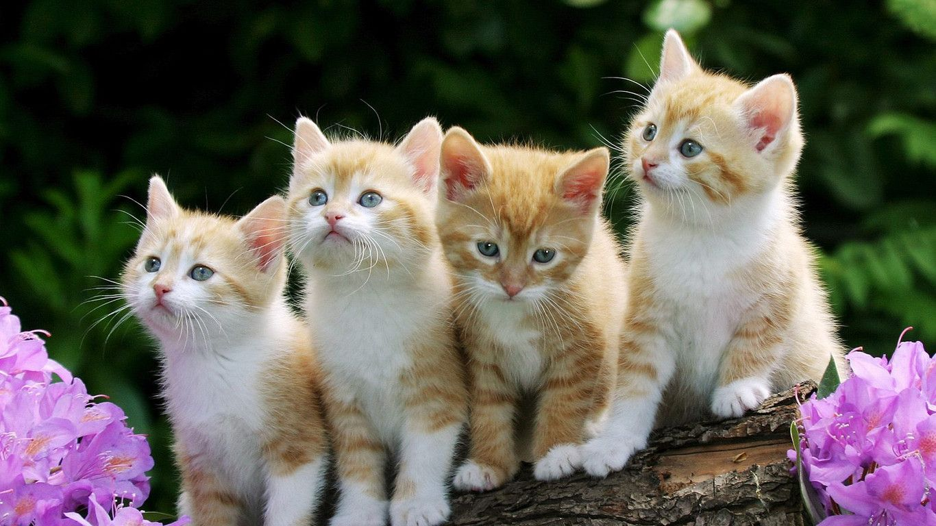 Collection of Cat Desktop Backgrounds on HDWallpapers