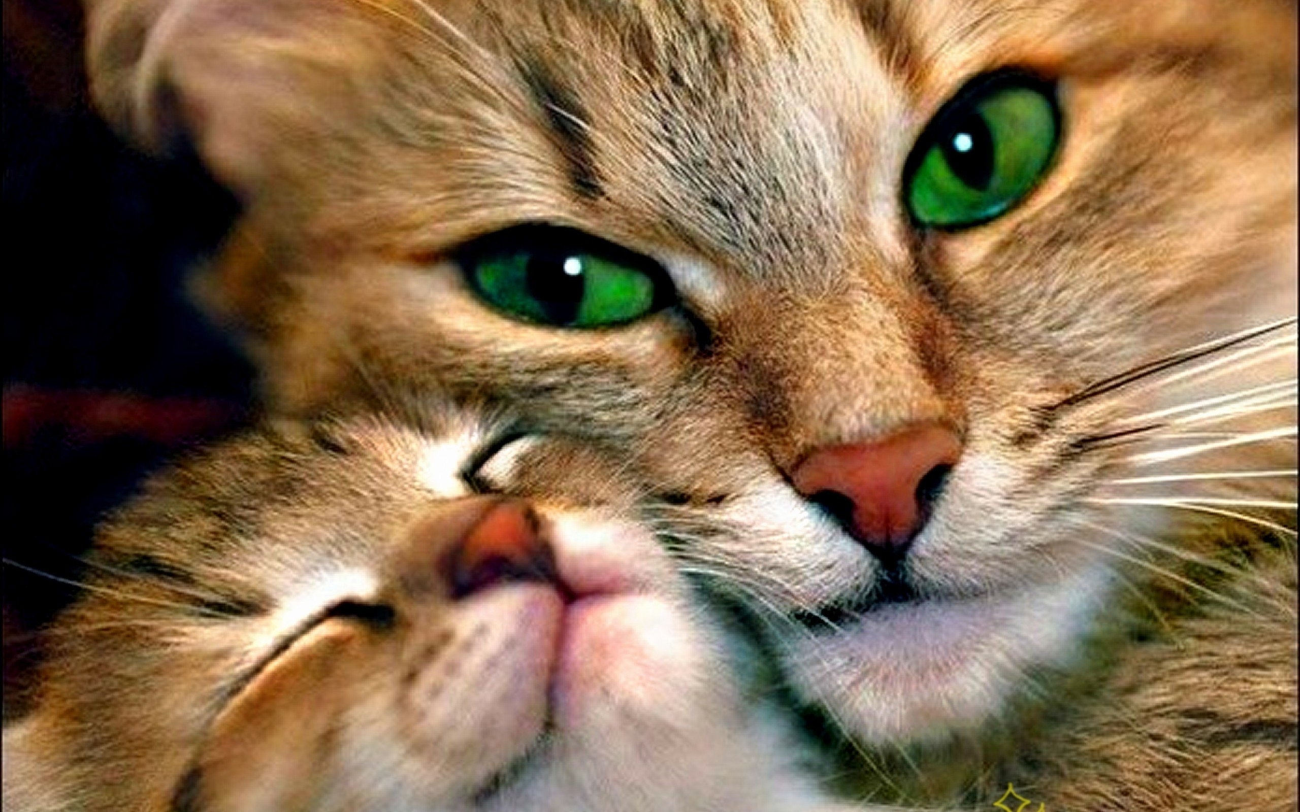 Awesome Love Cat Mom Wallpaper HD 198 #3432 Wallpaper | High
