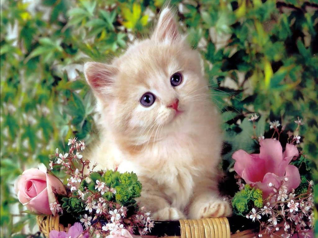 78+ ideas about Cute Cat Wallpaper on Pinterest | Cat phone