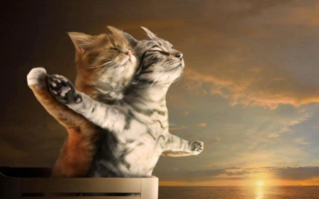 Collection of Cat Love Wallpaper on HDWallpapers