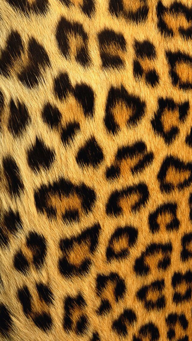 Collection of Cheetah Iphone Wallpaper on HDWallpapers