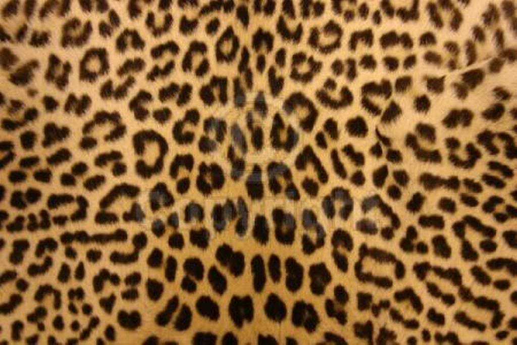 Cheetah Fur Wallpapers Group (35+)