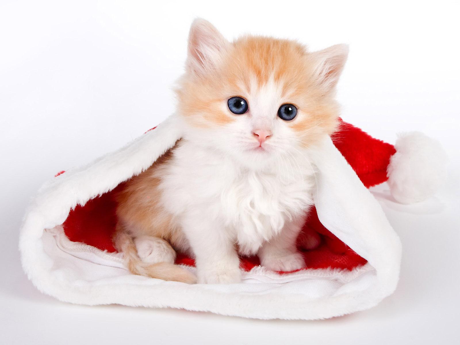 Christmas kittens wallpaper sf wallpaper kittens wallpaper christmas wallpaper src altavistaventures Images