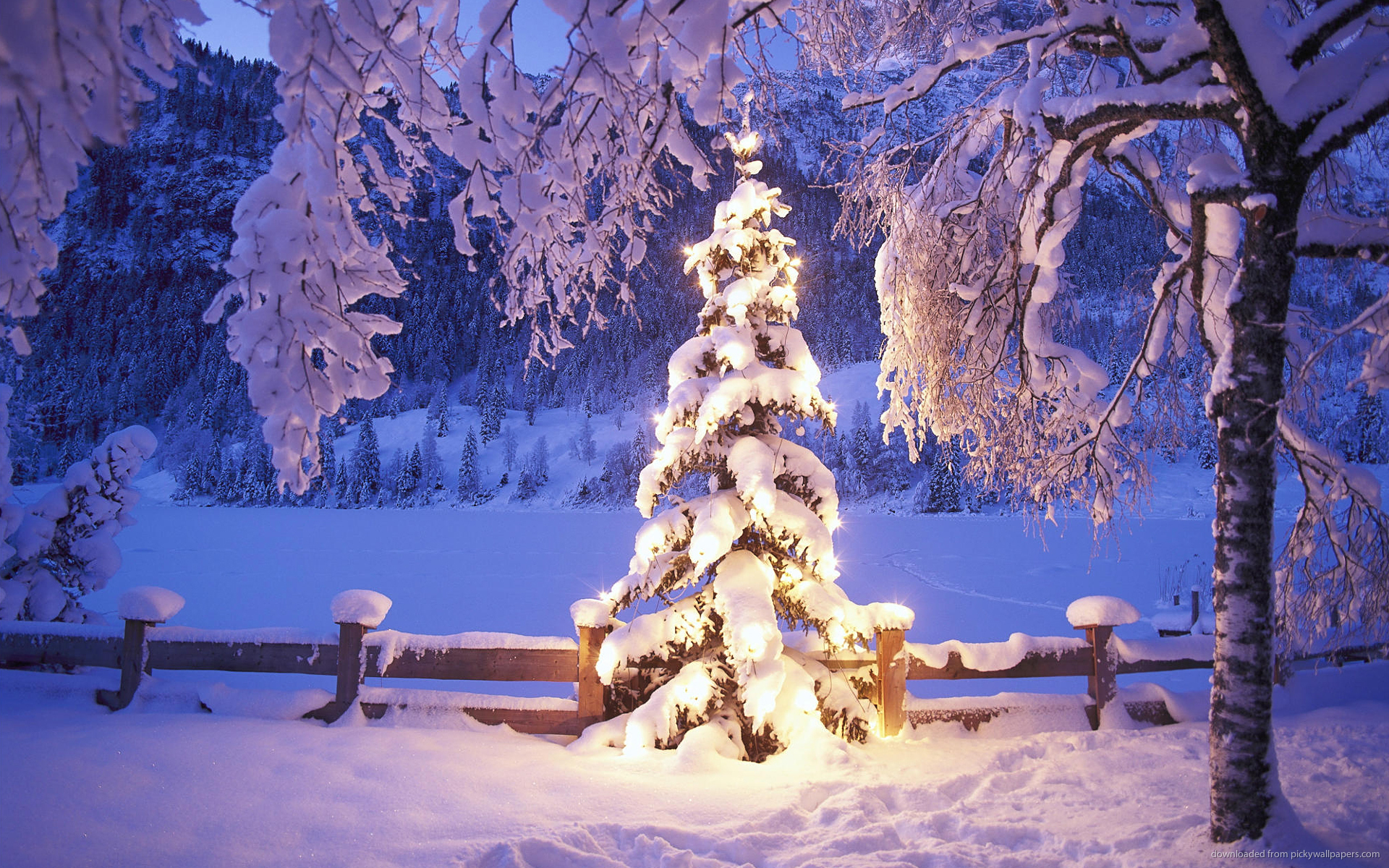 Download 1920x1200 Natural Christmas Tree In Snow Wallpaper