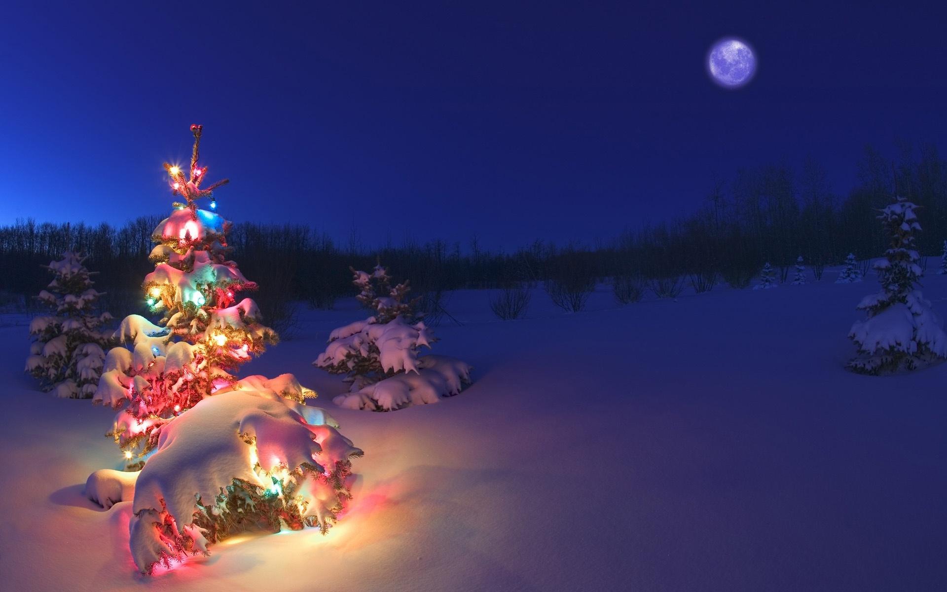 Weihnachtsbilder New York.Christmas Tree Snow Wallpaper Sf Wallpaper