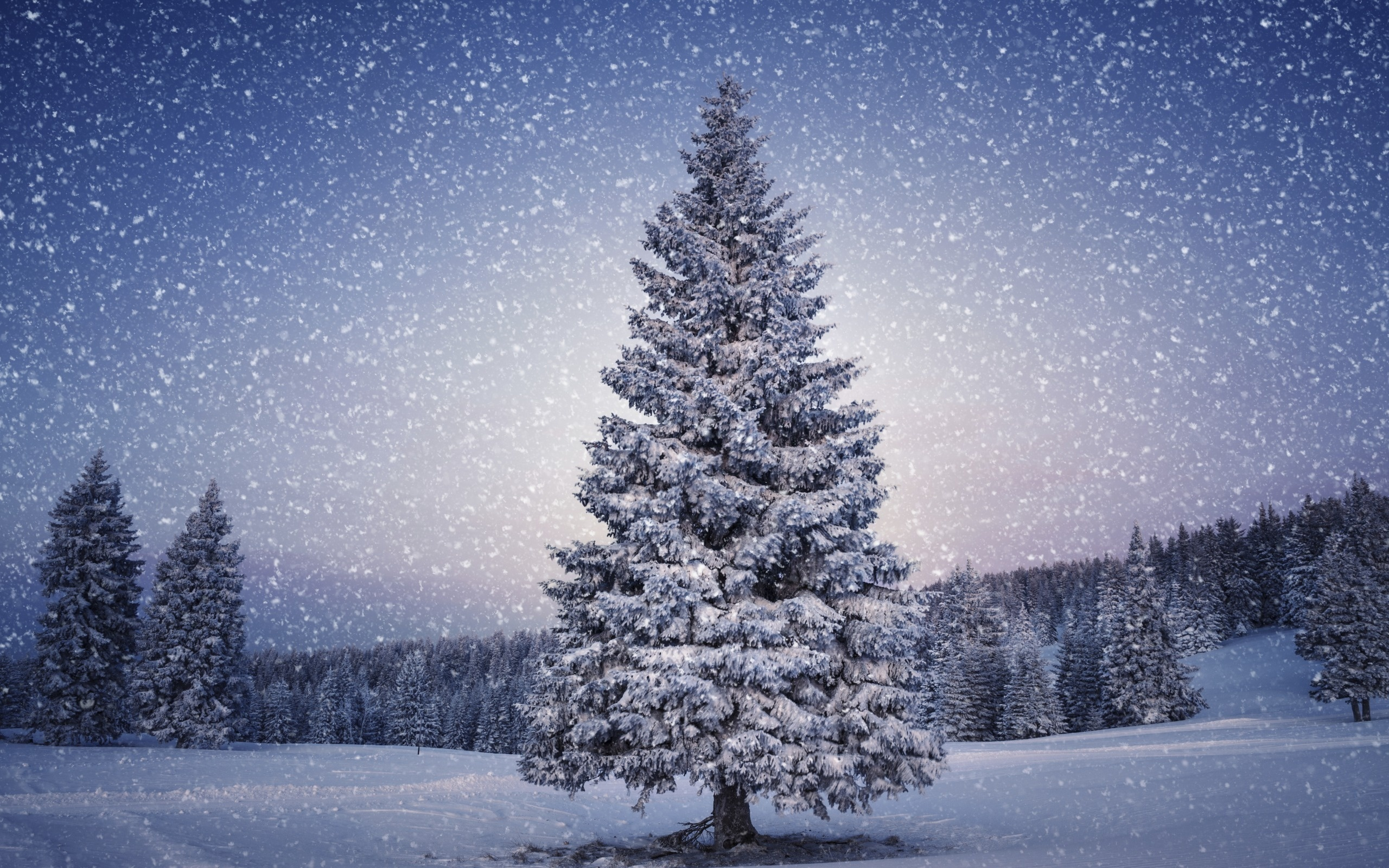 christmas trees wallpapers - sf wallpaper