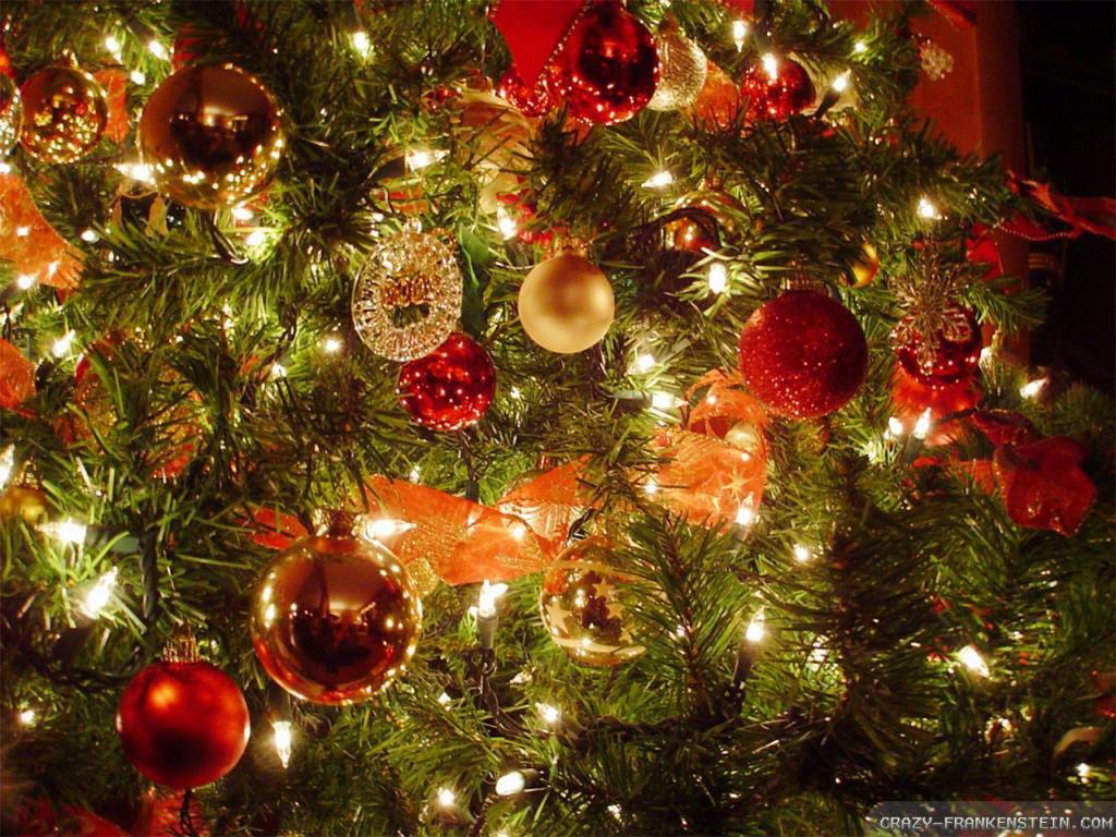 Christmas Trees Wallpapers Sf Wallpaper