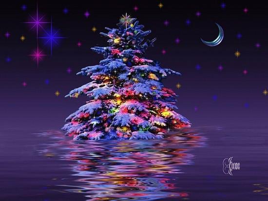 Christmas trees wallpapers - SF Wallpaper