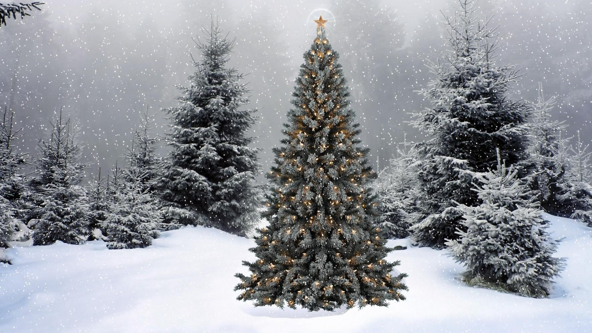 Collection of Christmas Winter Background on HDWallpapers