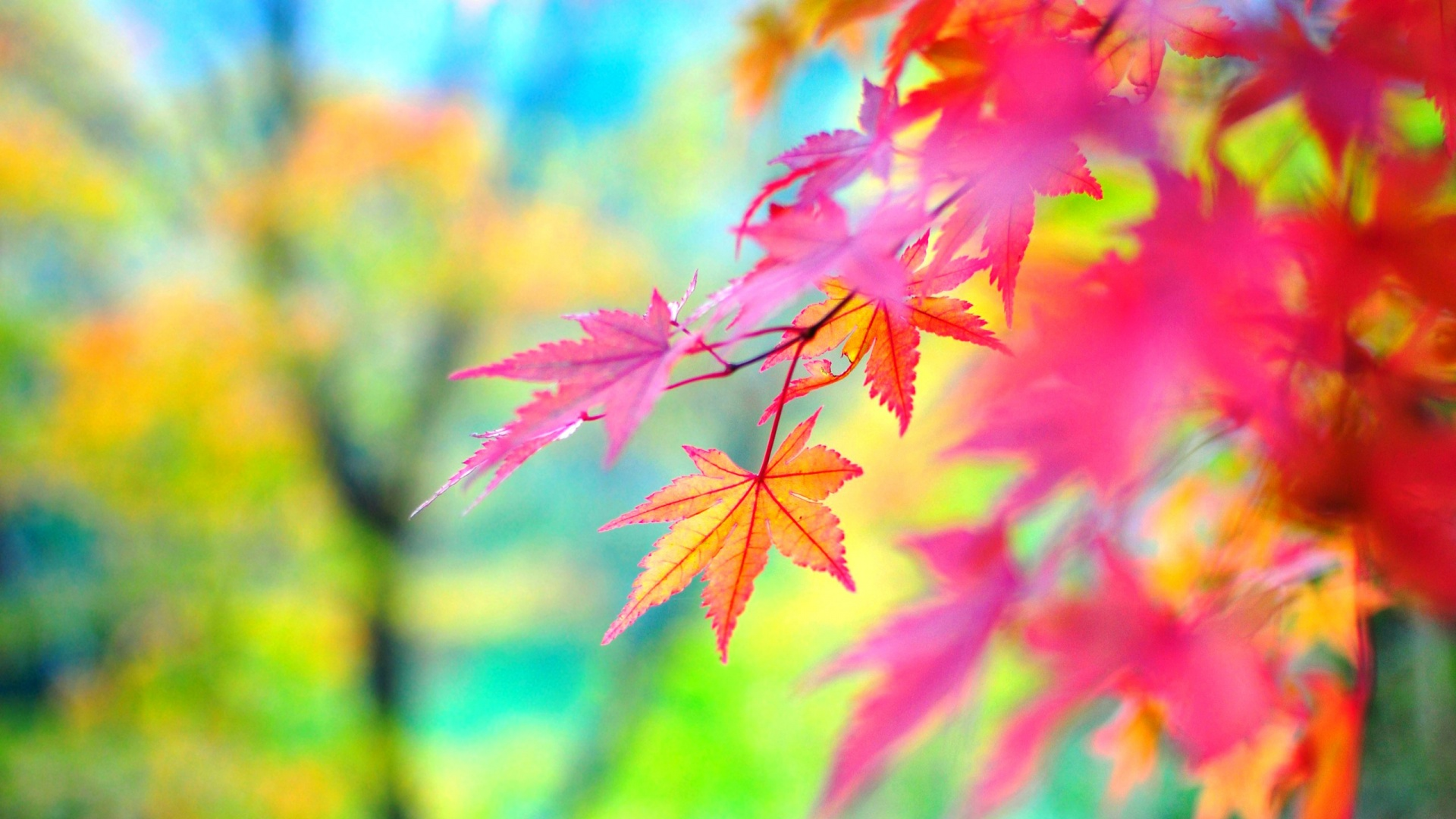 Colorful Nature Wallpaper