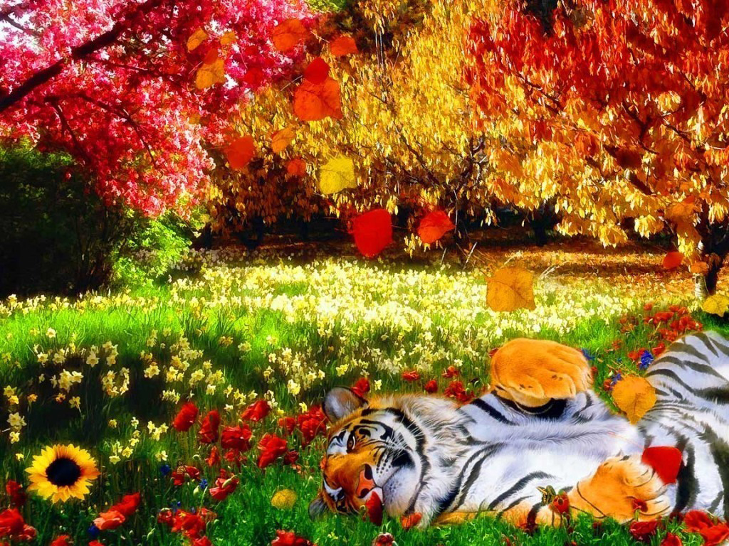 Colorful Nature with Tiger HD Wallpaper | Rocks wallpaper hd