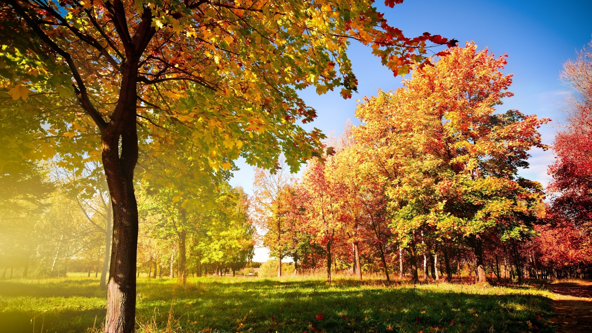 Download Creative Colorful Autumn Landscape Nature Wallpaper