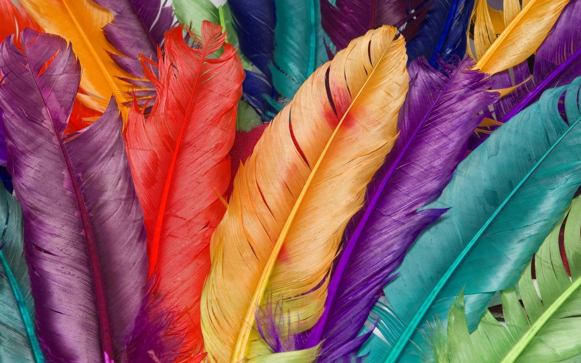 Feathers Backgrounds Group (34+)