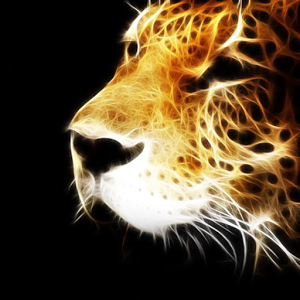 Cool Animal Wallpapers - Android Apps on Google Play