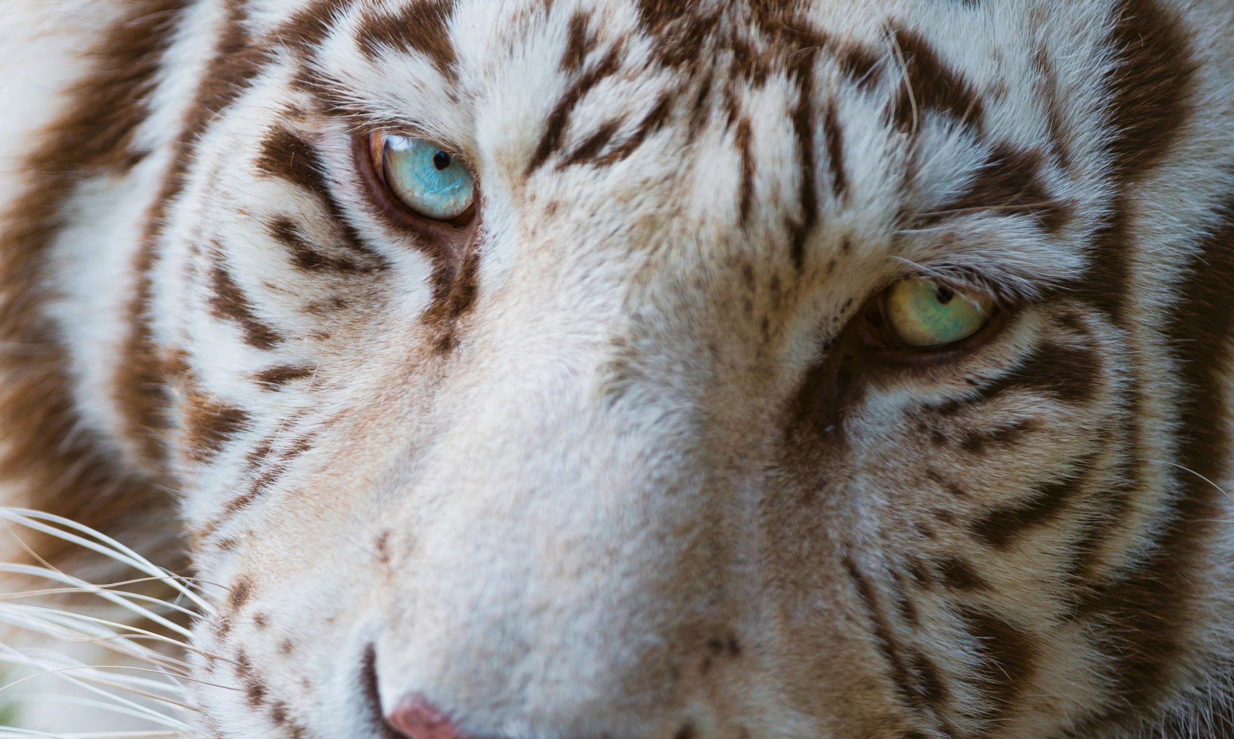 Cool Animals Wallpapers Free