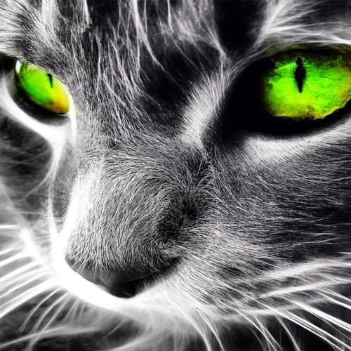 Cool Cat Backgrounds - WallpaperSafari