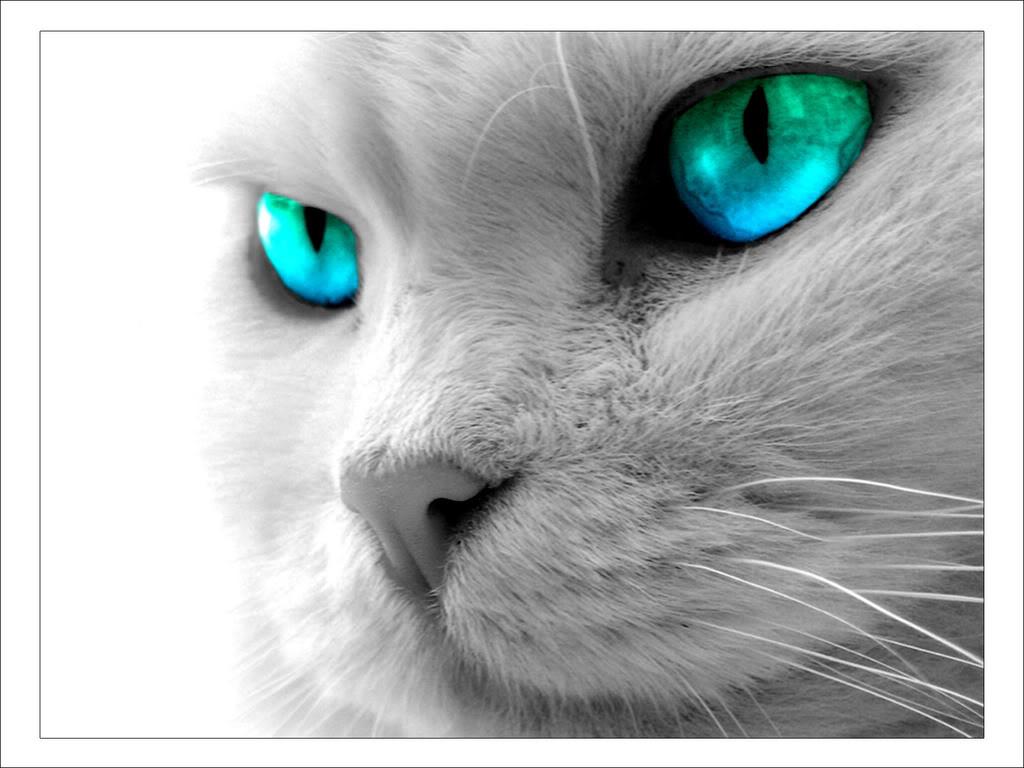 Cool Cat Wallpaper - WallpaperSafari