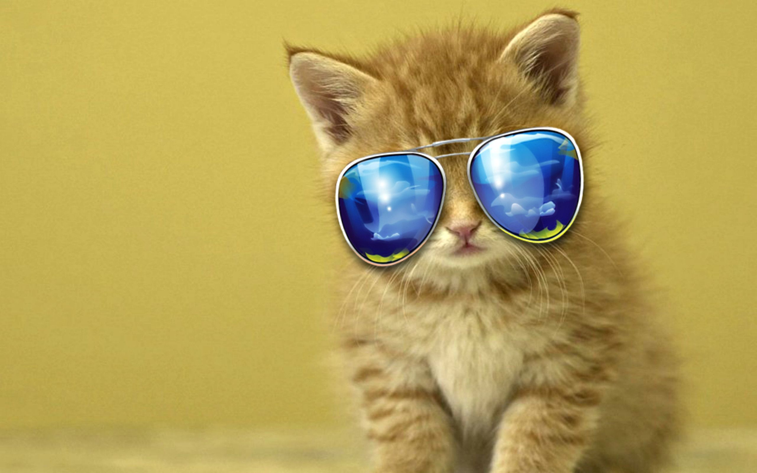 Cool Cat Backgrounds - Wallpaper Cave