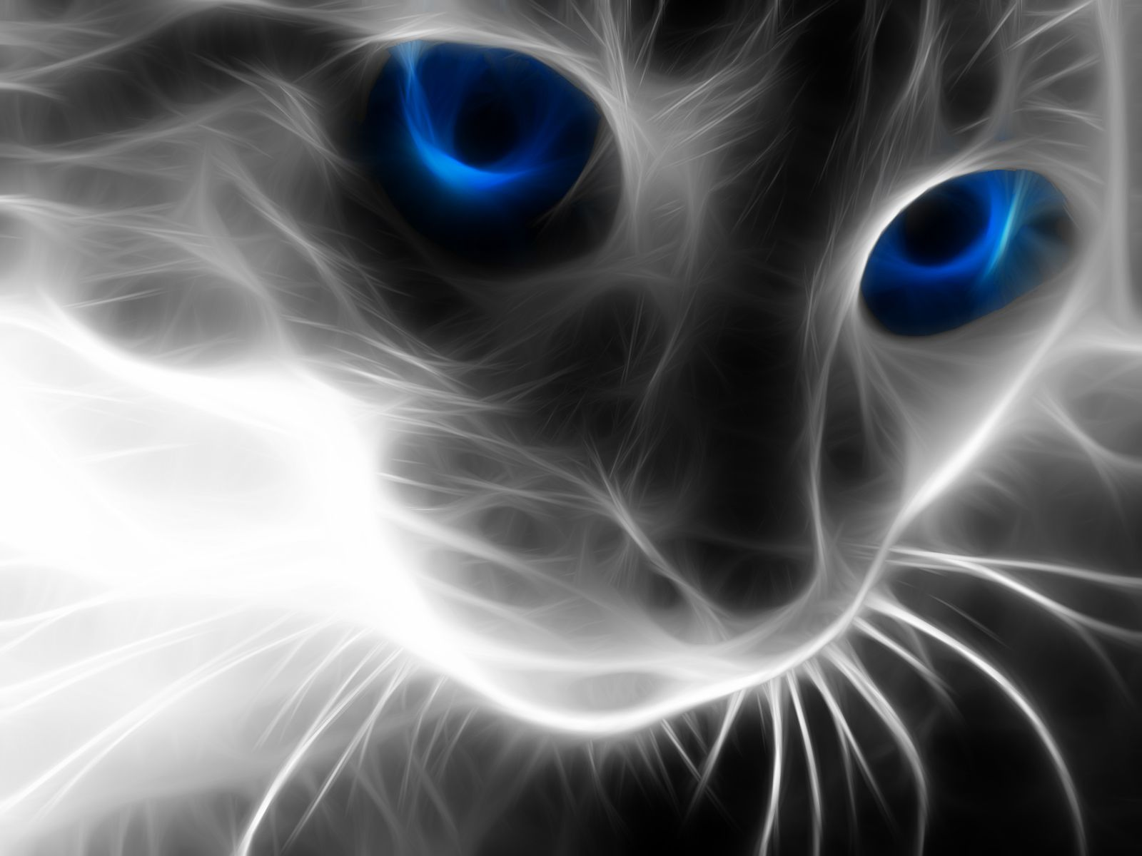 Collection of Cool Cat Wallpapers on HDWallpapers