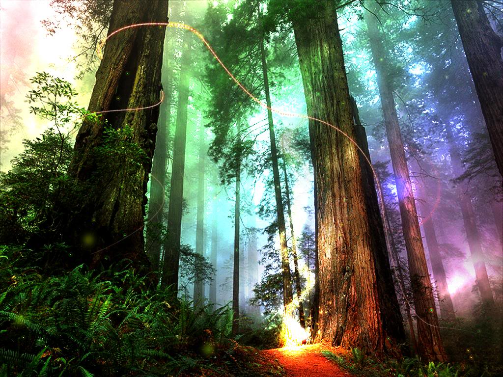 Cool forest backgrounds