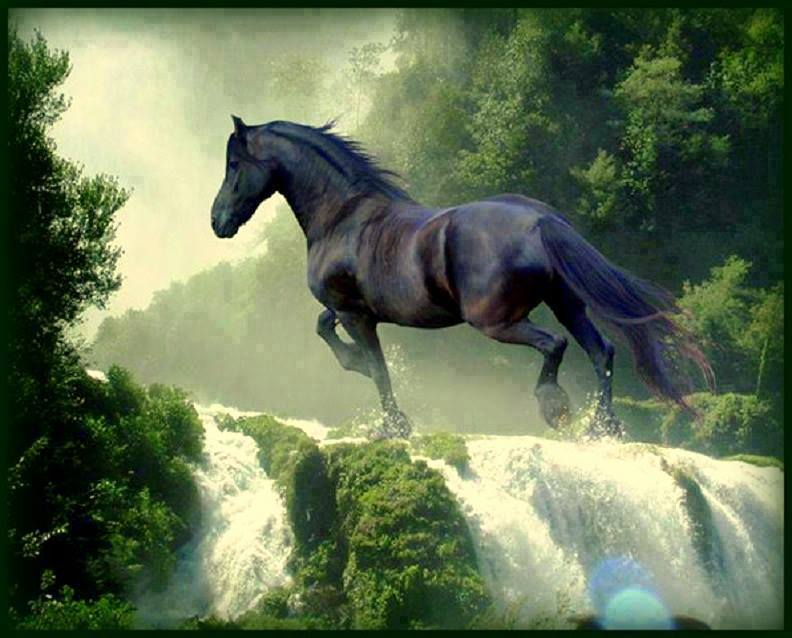Cool Horse Wallpapers - WallpaperSafari