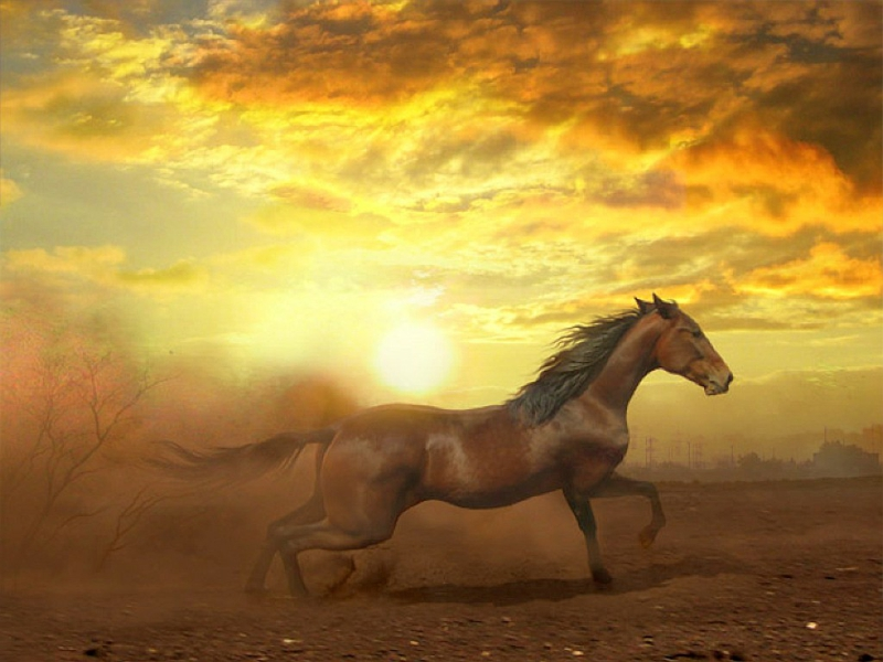 Cool Horse Wallpapers Group (75+)
