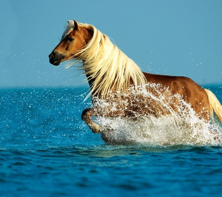 Cool Horse - Horses & Animals Background Wallpapers on Desktop