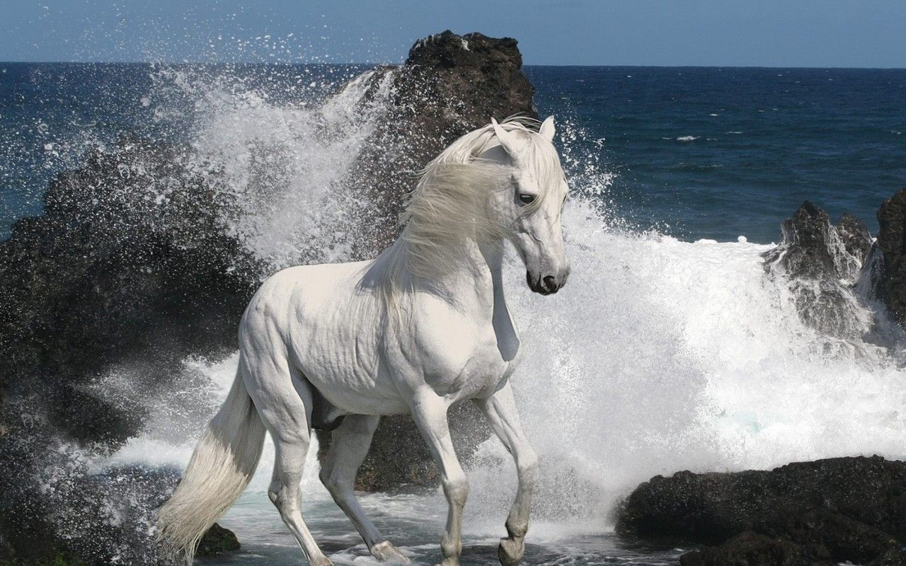 Horse Wallpapers - Wallpaper Cave