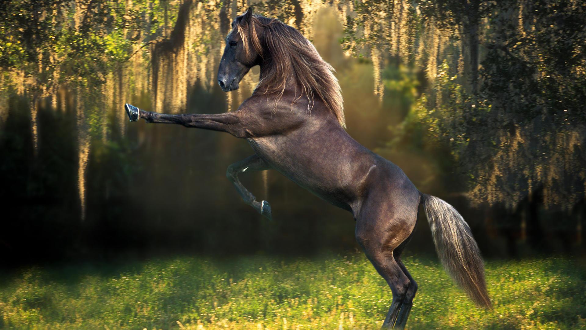 Cool Horse Wallpaper #24386 Wallpaper | High Resolution Wallarthd com