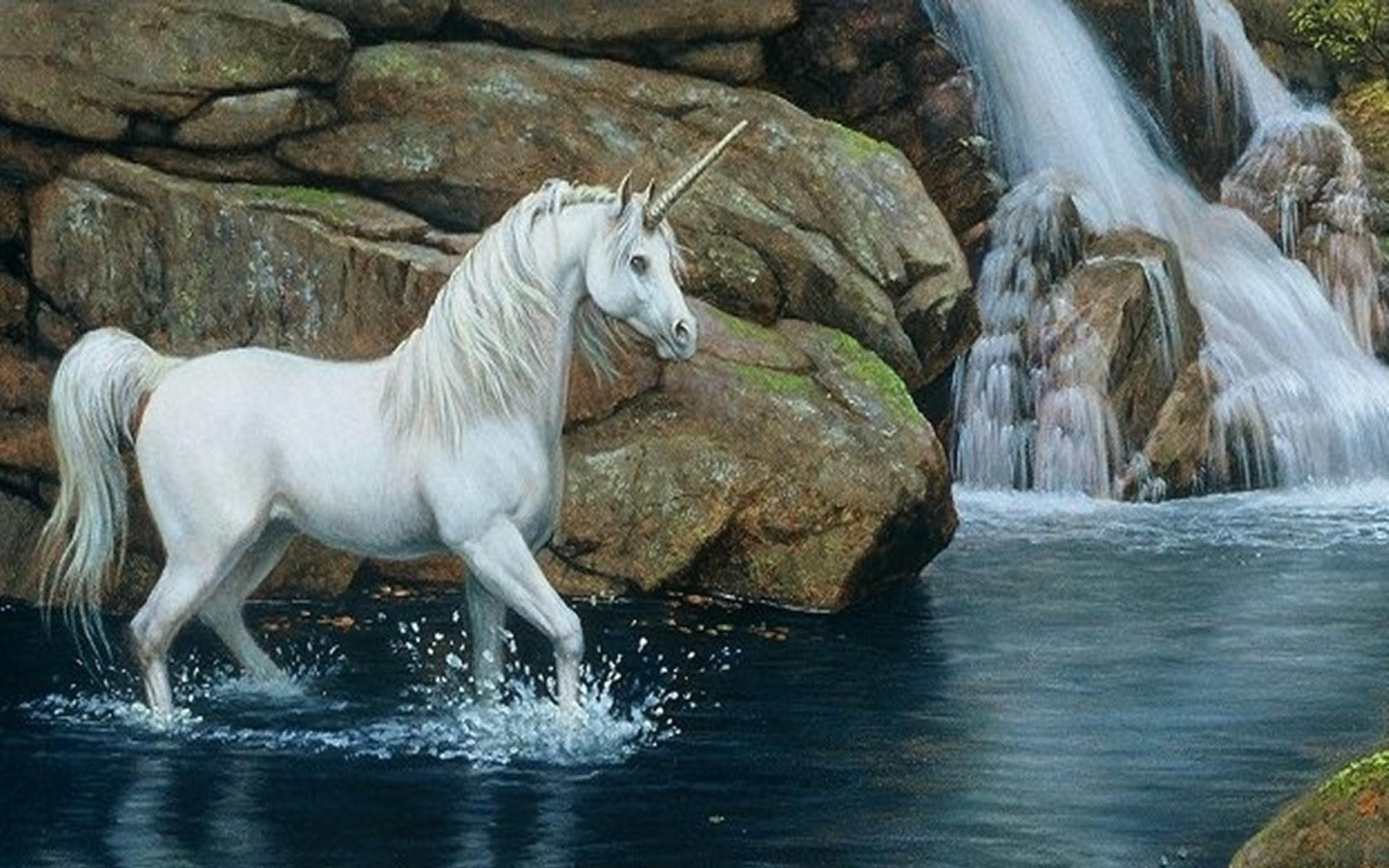 HD Horse Desktop Wallpaper - WallpaperSafari