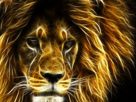 3D Cool Lion Wallpaper | 3D Wallpapers - All Types | Pinterest