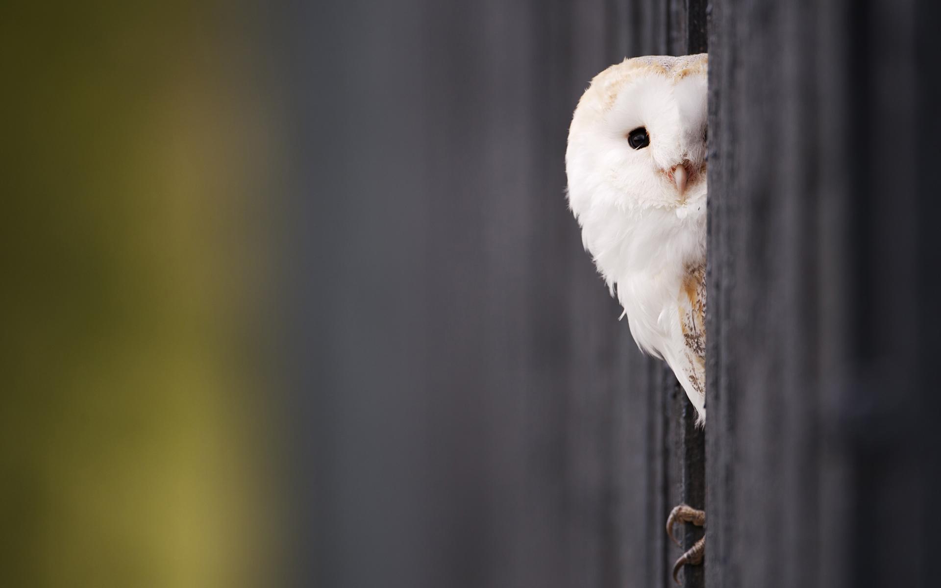 1000+ ideas about Cute Owls Wallpaper on Pinterest | Owl wallpaper