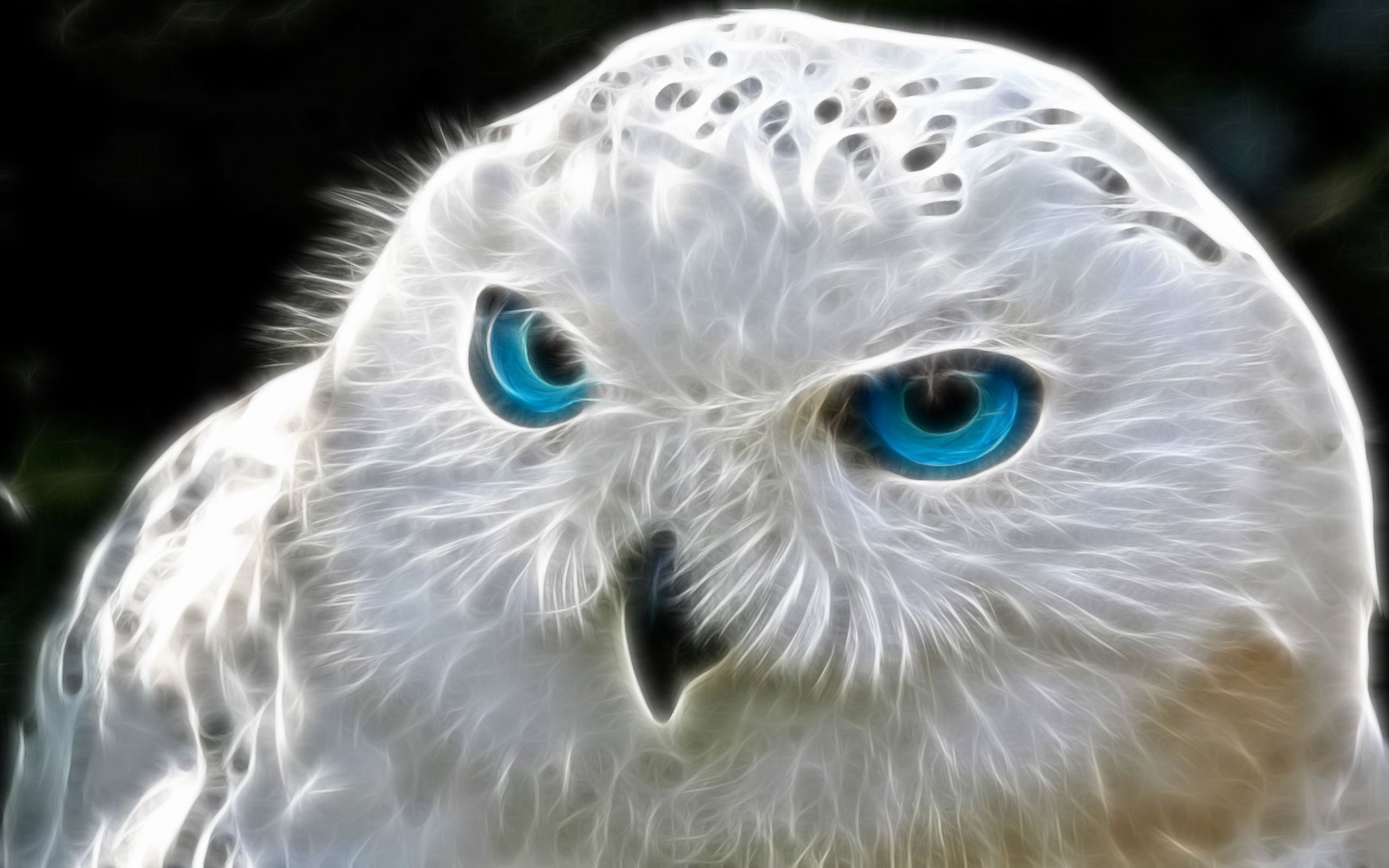 626 Owl HD Wallpapers | Backgrounds - Wallpaper Abyss