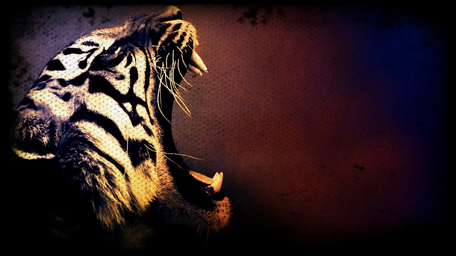 Cool Tiger Backgrounds Page 1