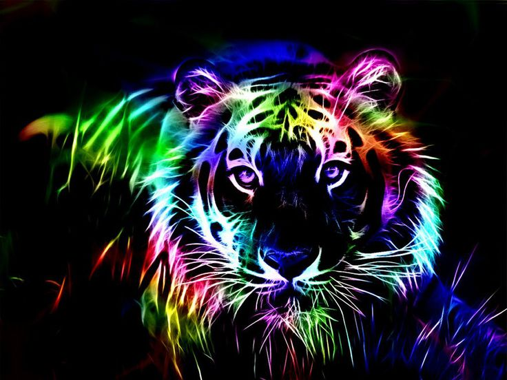 Collection of Cool Tiger Wallpaper on HDWallpapers