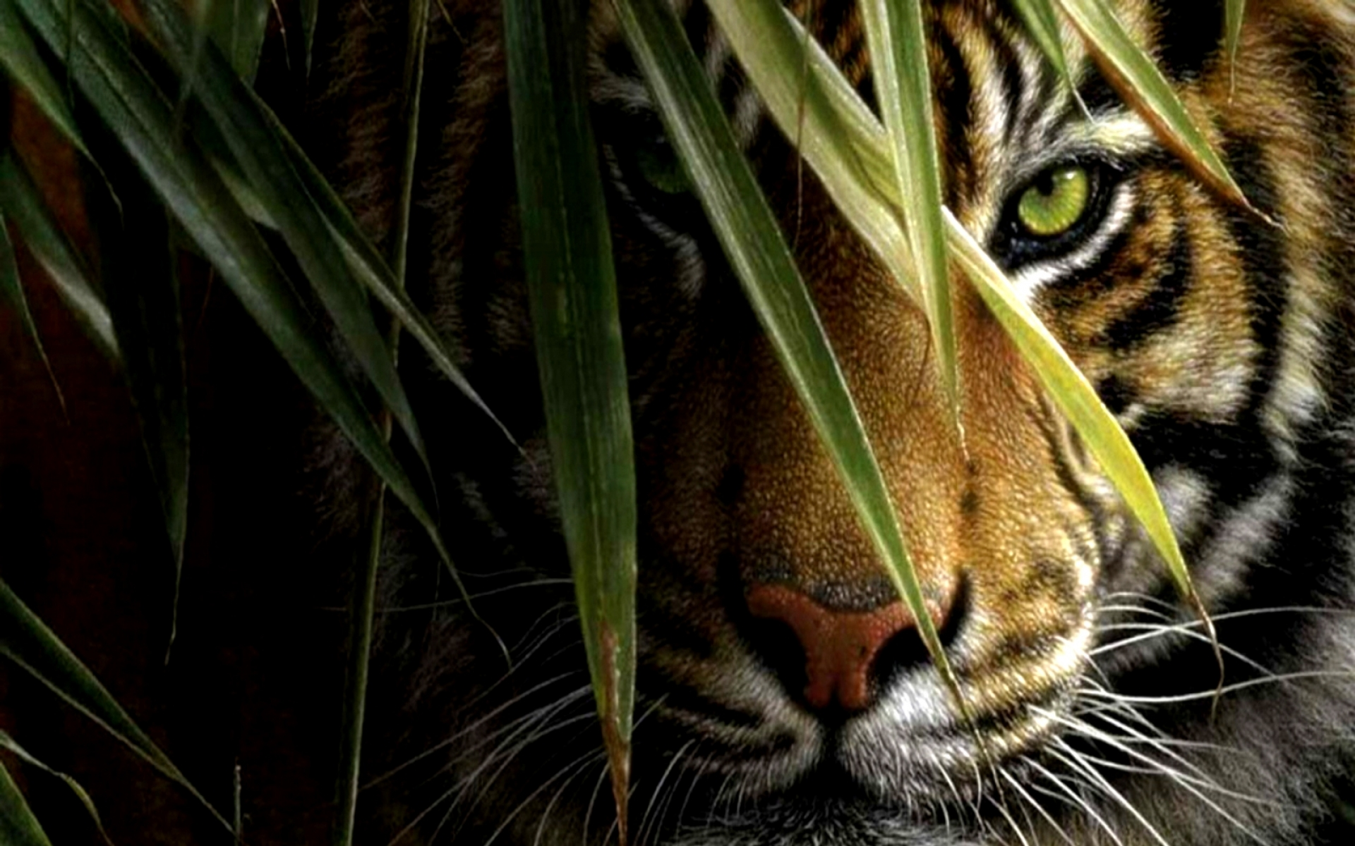 Cool Tiger Backgrounds - WallpaperSafari