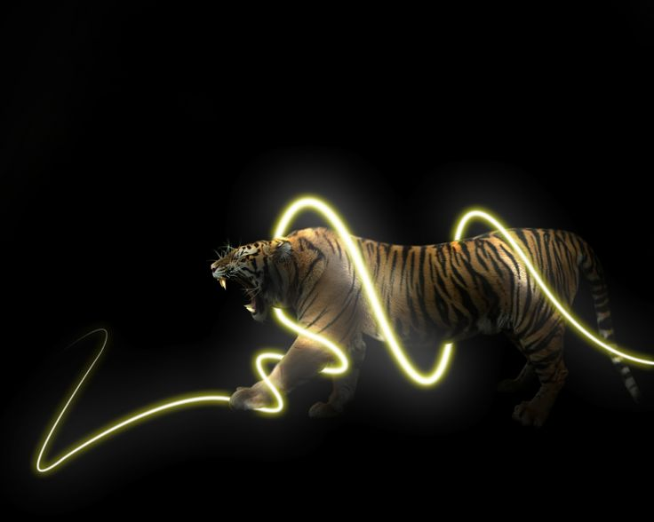 Cool Tiger wallpaper | Tiger Wallpapers | Pinterest | Wallpapers