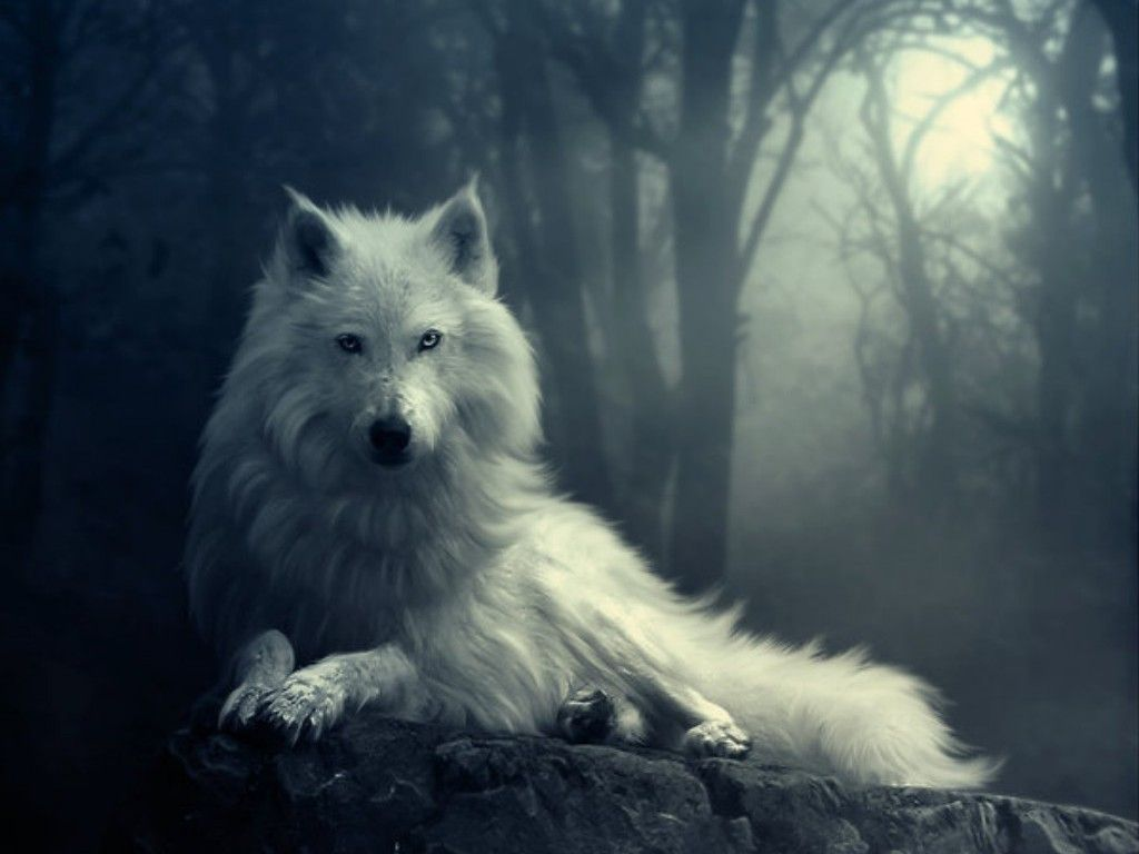 Collection of Cool Wolf Wallpapers on HDWallpapers
