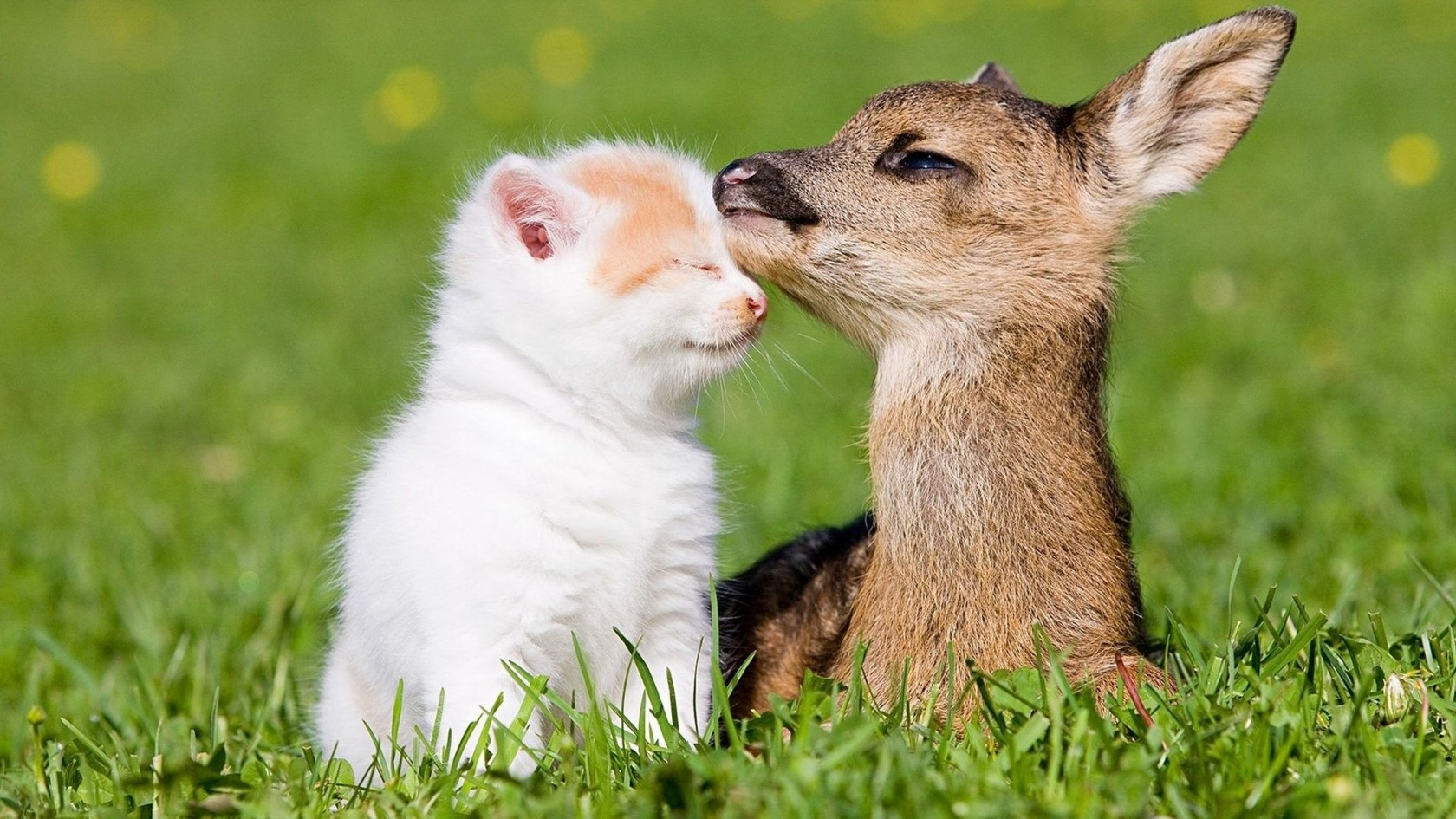 Those Cute Animals - Sharenator