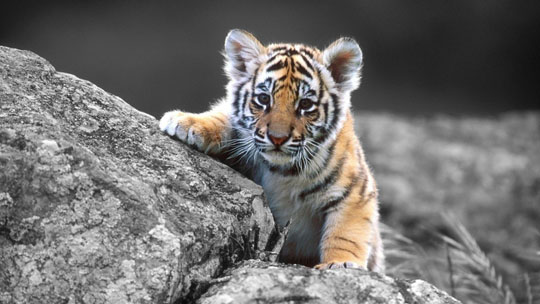 10 Cute Animals Wallpapers