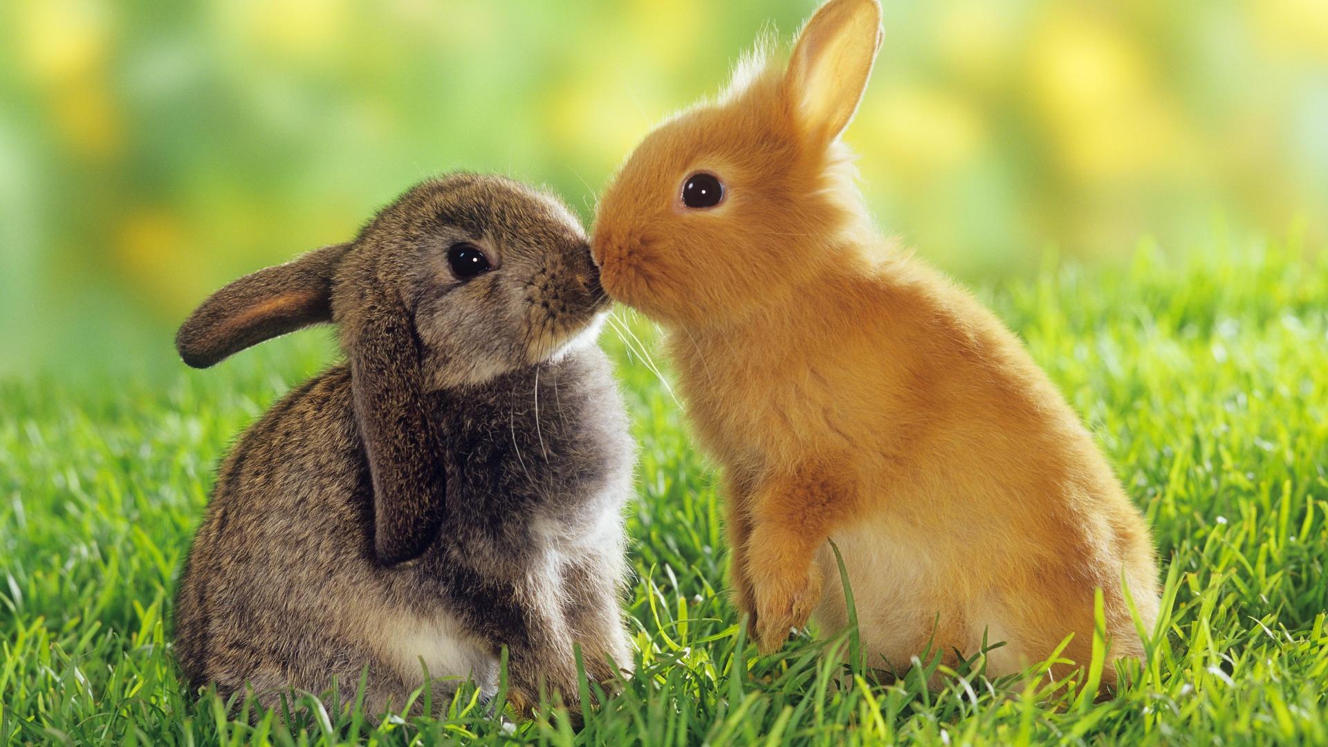 Cute Baby Animal Wallpapers   PixelsTalk Net