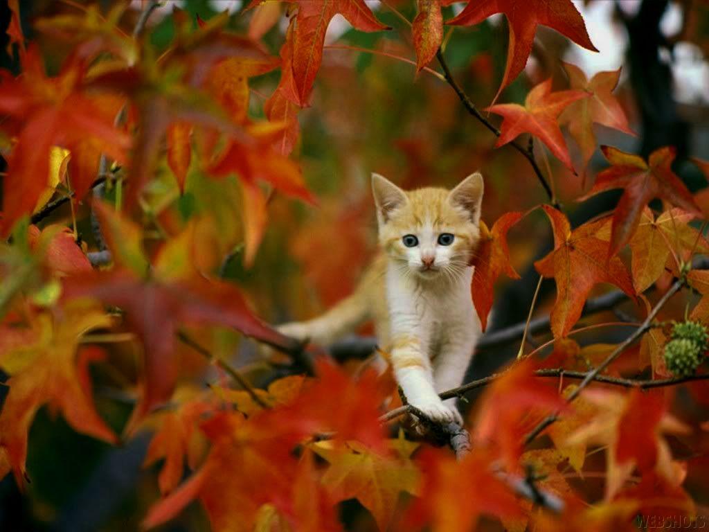 Cute Autumn Wallpaper | tianyihengfeng|Free Download High